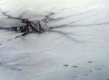 04-12-лед-полынья