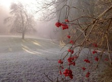 07-12-туман-зима