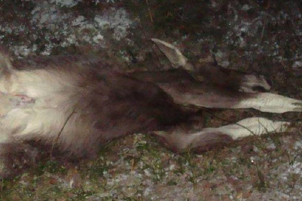 17-01-браконьер