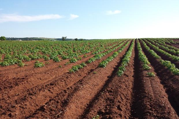 25-01-поле-картофель