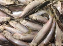 29-01-рыба-салака