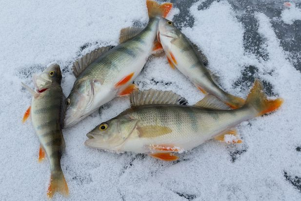 18-02-рыба