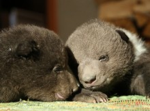 28-02-медвежата