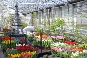 01-03-тюльпаны1