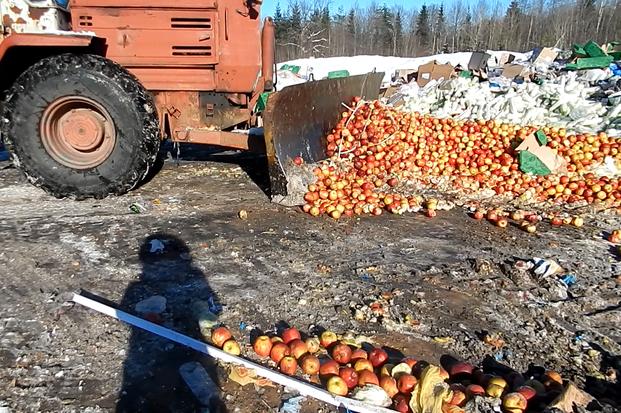 06-03-яблоки