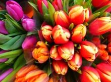 08-03-тюльпаны