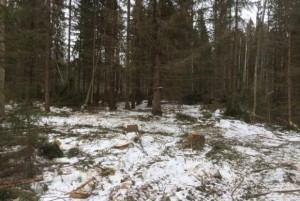 21-03-лесорубы