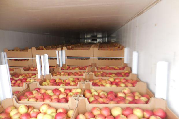 21-03-яблоки