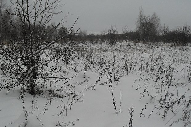 зарастающий земельный участок-зима