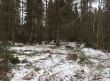 незаконая рубка леса