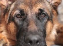 24-05-собака3