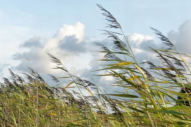 04-06-ветер