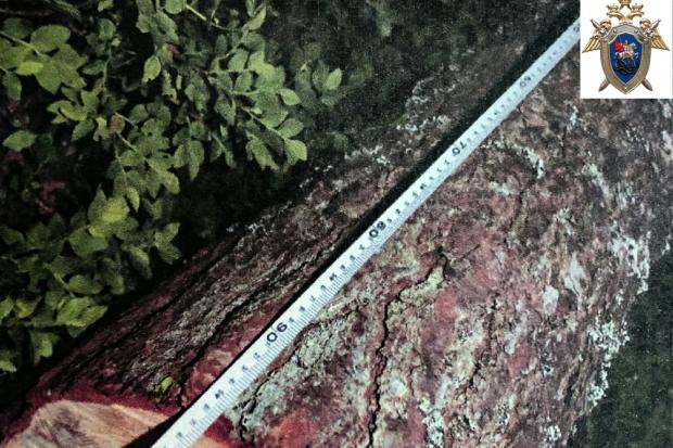 09-06-суск-дерево