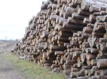 Кимры лес