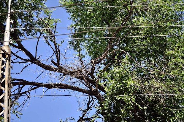 электропровода-деревья