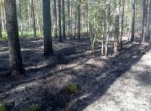 сгоревшая лесная подстилка-бологовский район