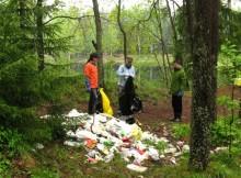 уборка леса от мусора