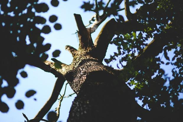02-07-дерево