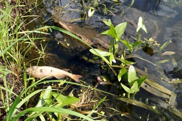 05-07-дохлая-рыба