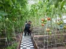 12-07-уфсин-помидоры