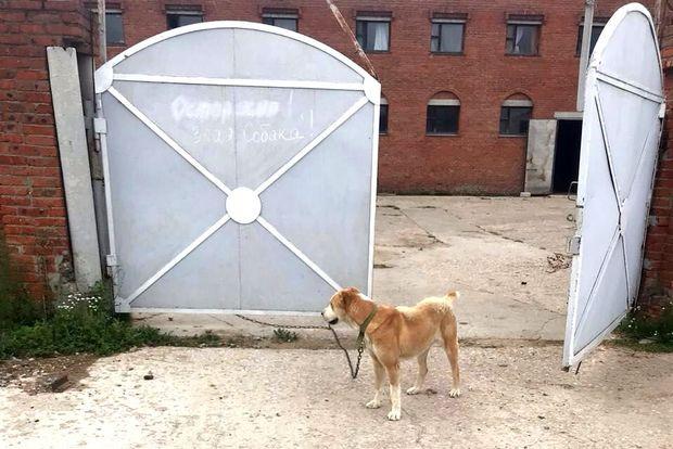 25-07-собака-суск