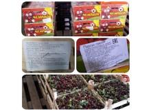 ягоды-фрукты-нелегалы