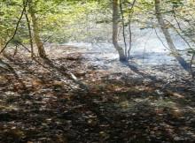 горение лесной подстилки