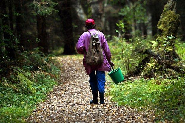 грибник в лесу