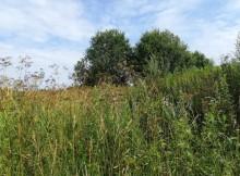 заброшенный земельный участок