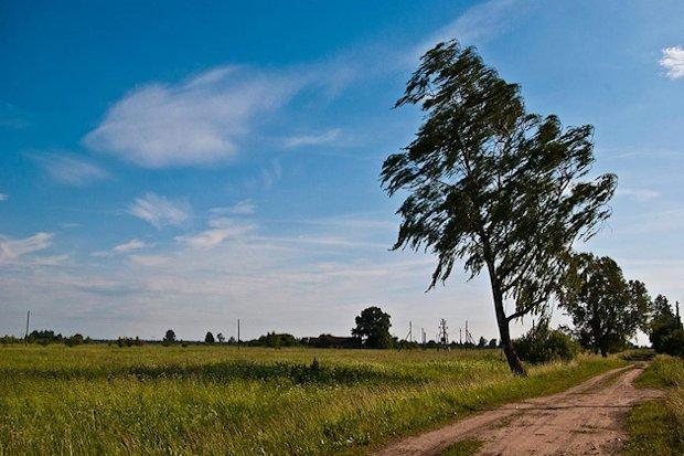 ветреная погода-природа-поле