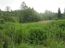 зарастание земель-лихославльский район