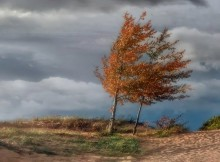 сильный ветер-осень