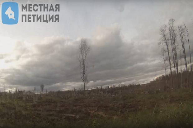 вырубка_леса__осташков.6ZxZZ