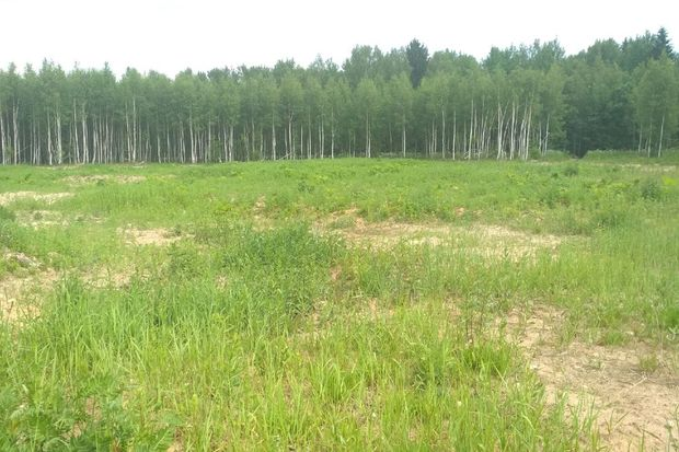 21-06-ручьевское1