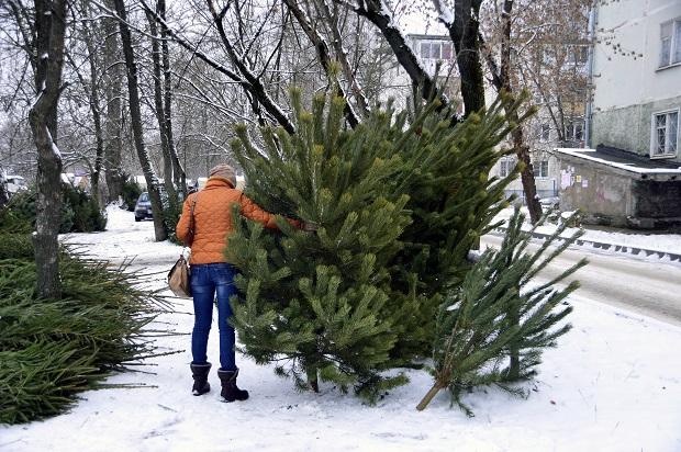 Стали известны адреса, где в Твери будут продавать ёлки к Новому году