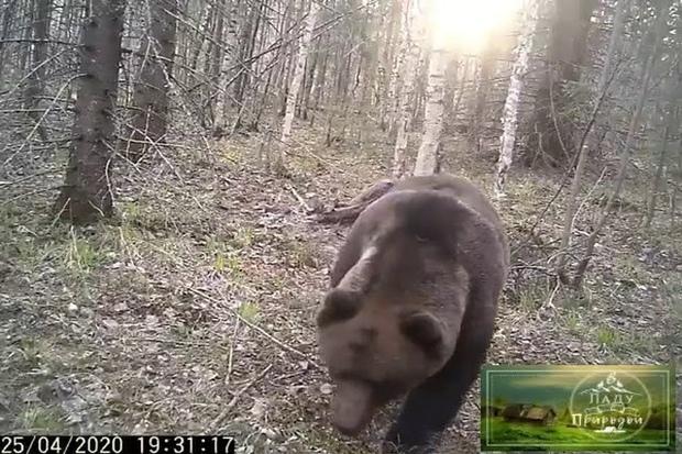 медведь.LpziT