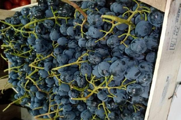 23,10 виноград